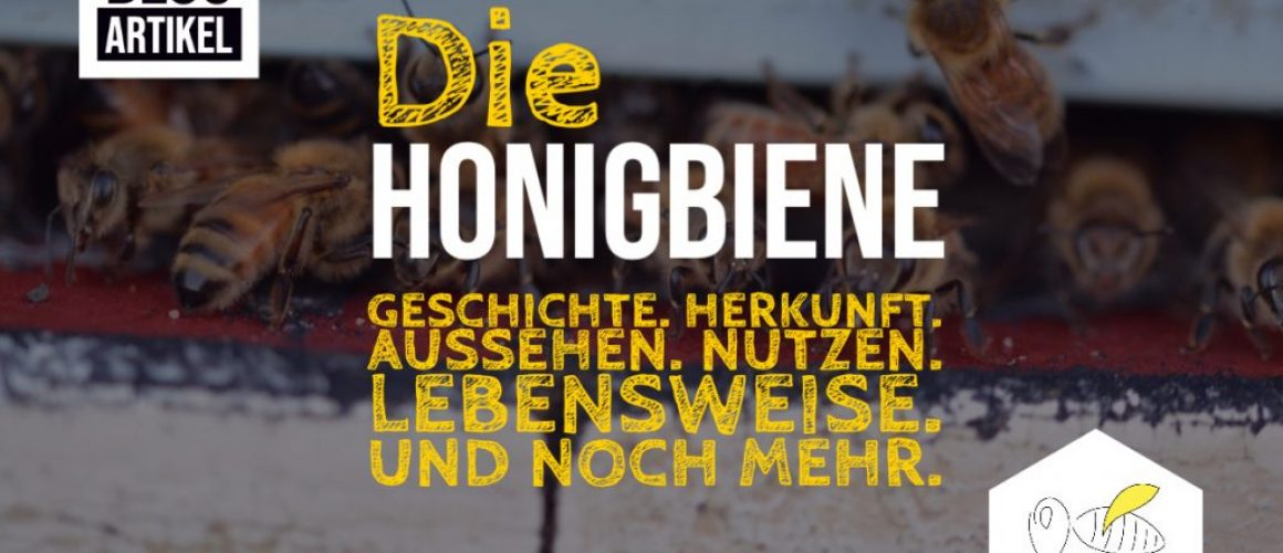 Die Honigbiene - Titelbild Blogpost