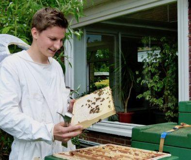 Imker Felix Mrowka hält ein Honigrähmchen mit Bienen