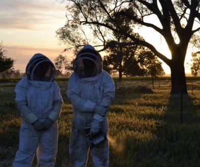Zwei australische Imker vor einem Sonnenuntergang