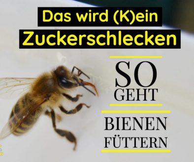 So geht Bienen Füttern - Blogpost
