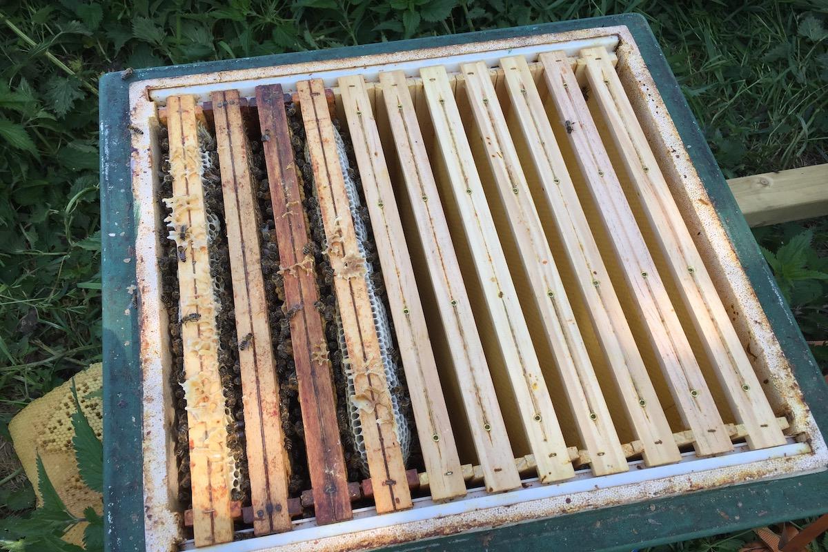 Ein Bienenvolk auf nur vier Waben