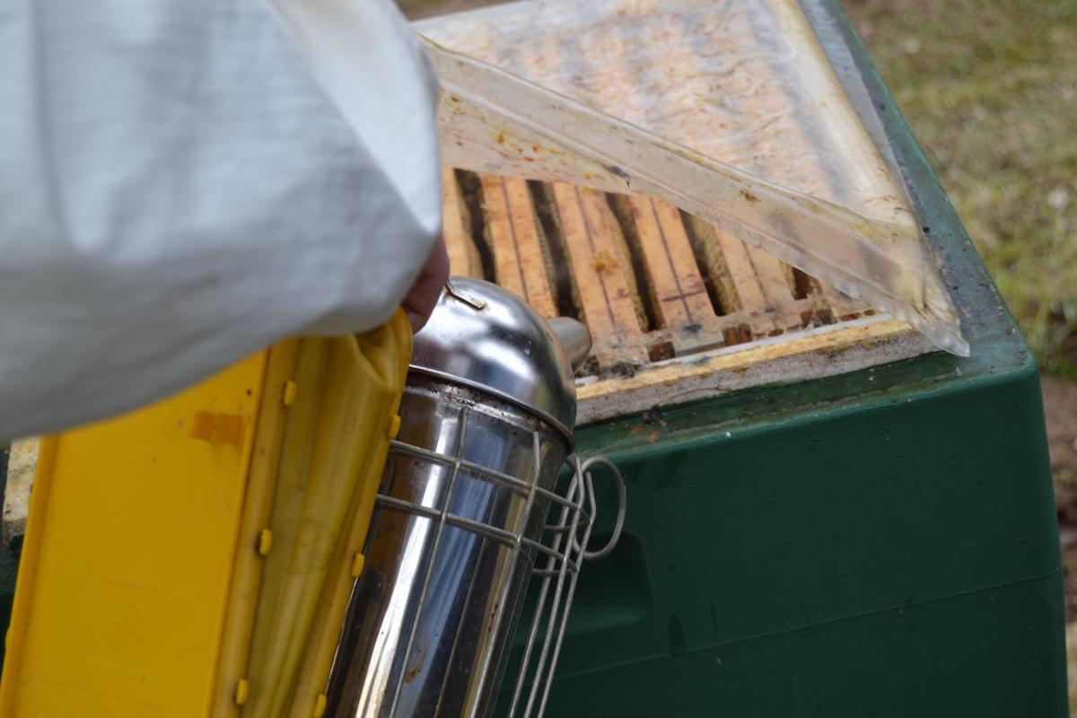 Eine Folie von einem Bienenvolk wird unter Raucheinsatz entnommen