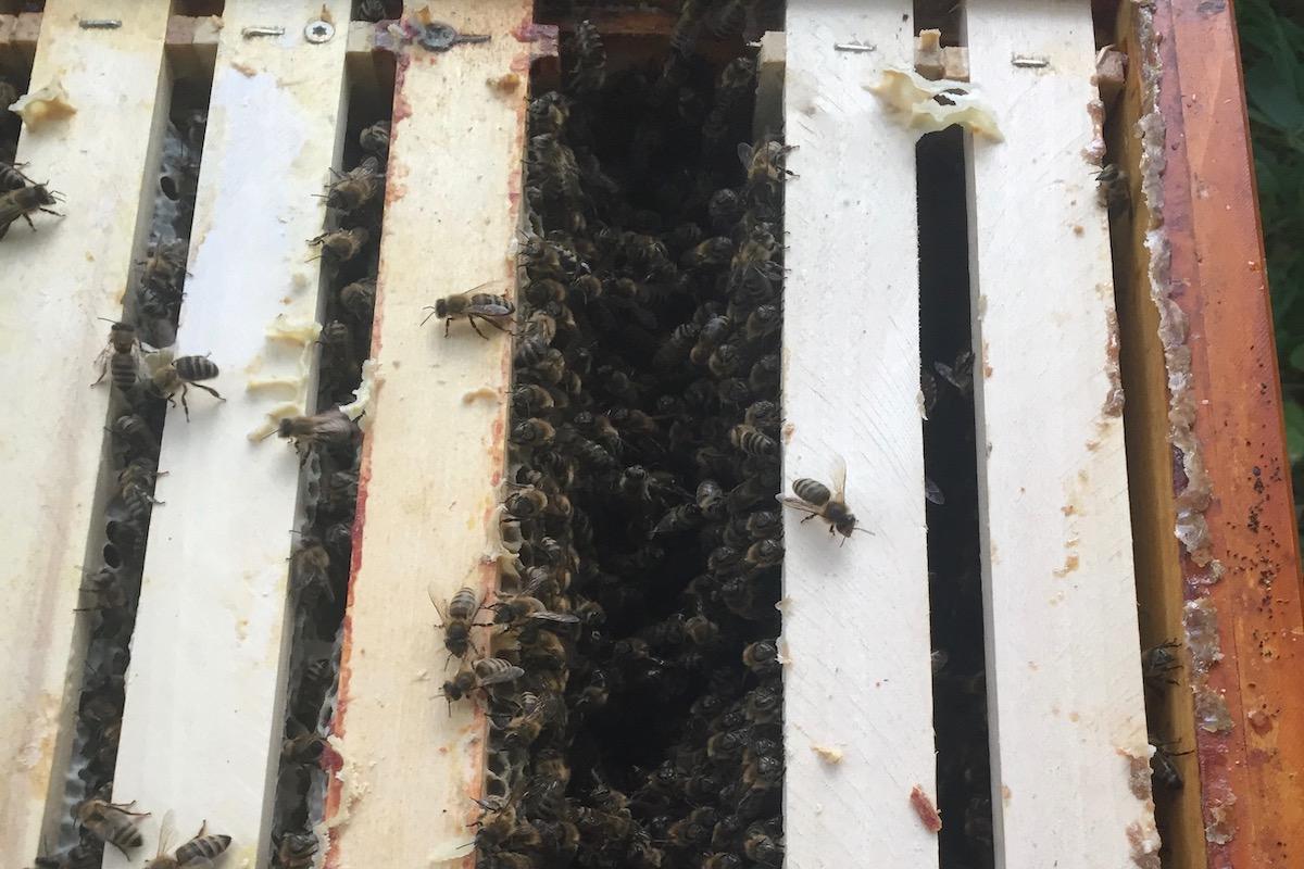 Eine Lücke für eine Futterzarge in einer Zarge für Bienen