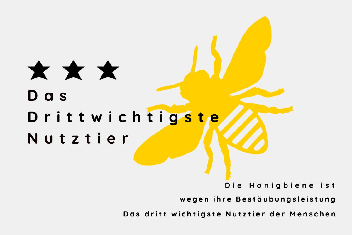 Die Honigbiene als dritt wichtigstes Nutztier der Menschen
