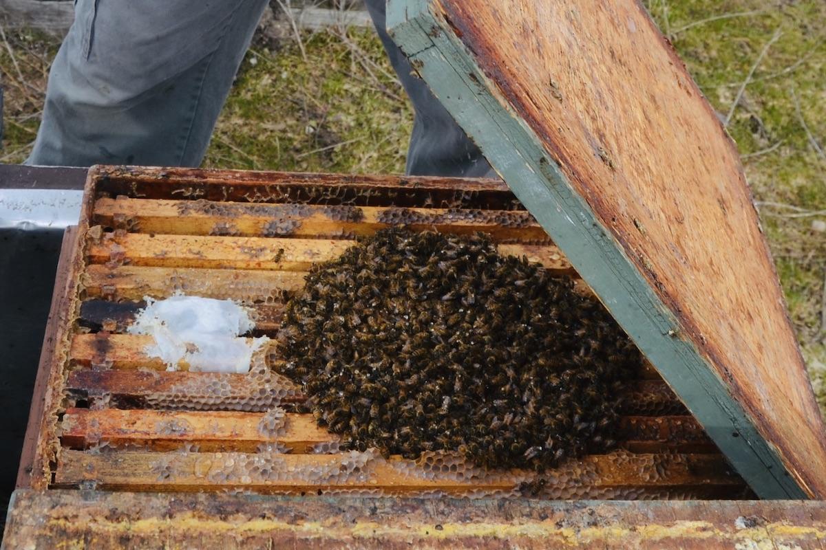 Beim Öffnen der Bienen im Winter, begegnet einem eine Bienentraube