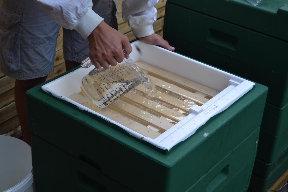 Bienenvolk wird mit Zuckersirup gefüttert, dazu wird eine Futterzarge verwendet