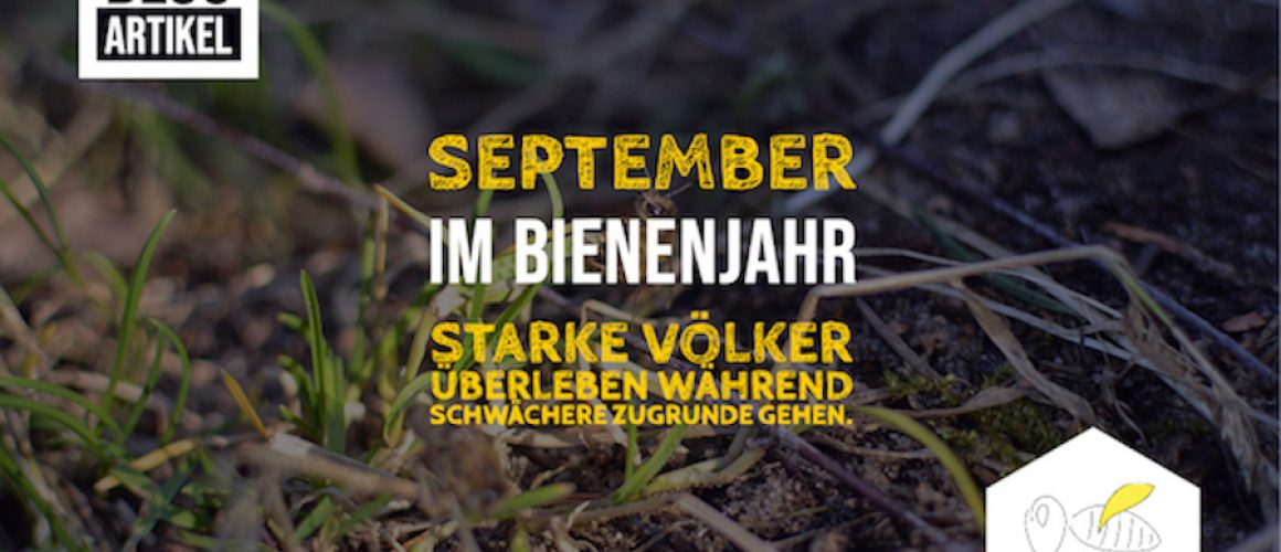 September Bienenjahr