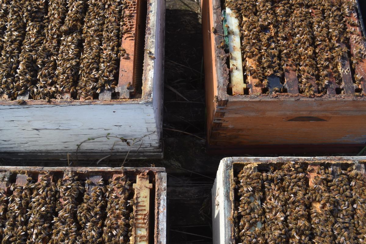 vier Bienenvölker stehen nebeneinander